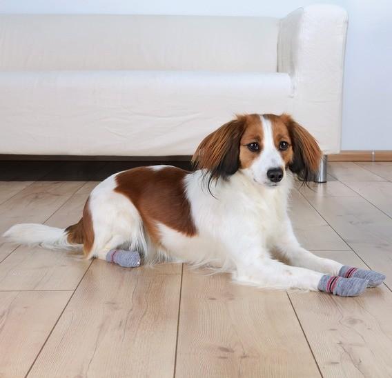 Trixie Hundesocken - Grau - L-XL