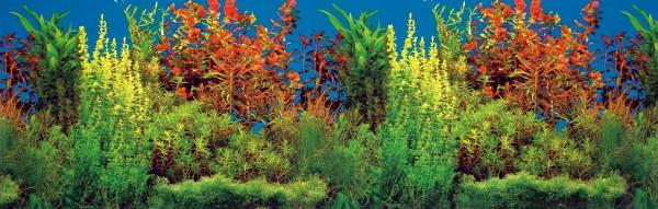 Trixie Aquarien-Rückwand 120x50 cm, beidseitig, Unterwasser-Landschaft