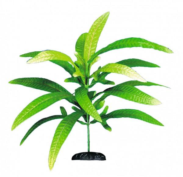 Aquariumpflanze - Microsorium - 25 cm, Seide