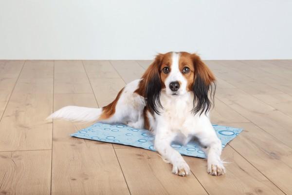 Trixie Kühlmatte für Hunde und Katzen, hellblau, Polyester